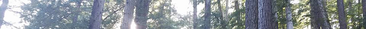 cropped-tree-background33.png
